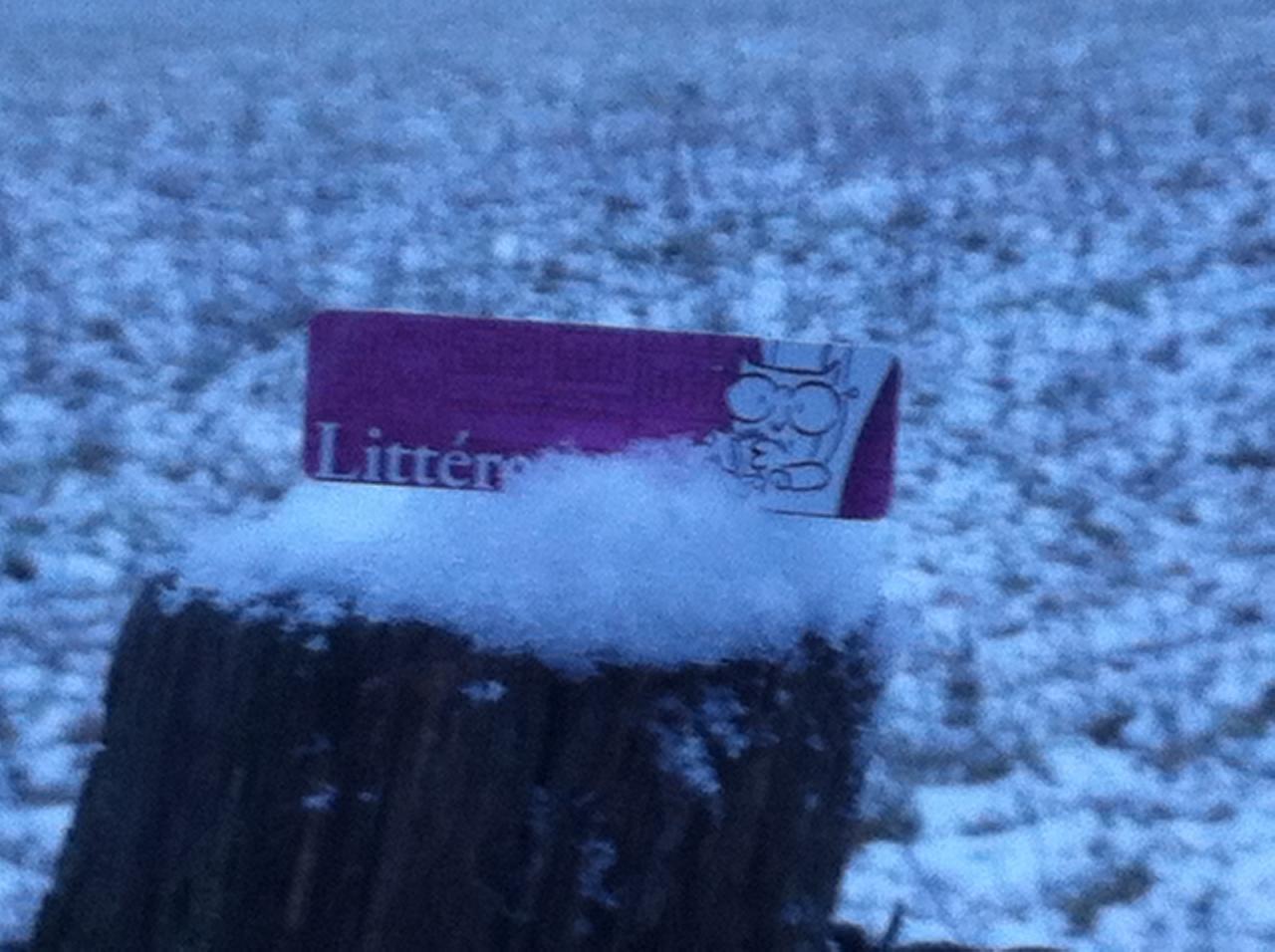 Les petites chouettes sous la neige